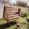 Kippenhok gemaakt in Pilifs